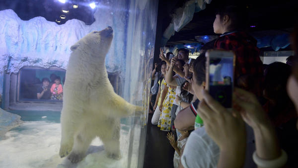 The 'world's saddest' polar bear is trapped in a tiny cage at a shopping mall in China