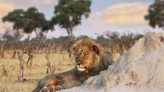 Cecil's companion