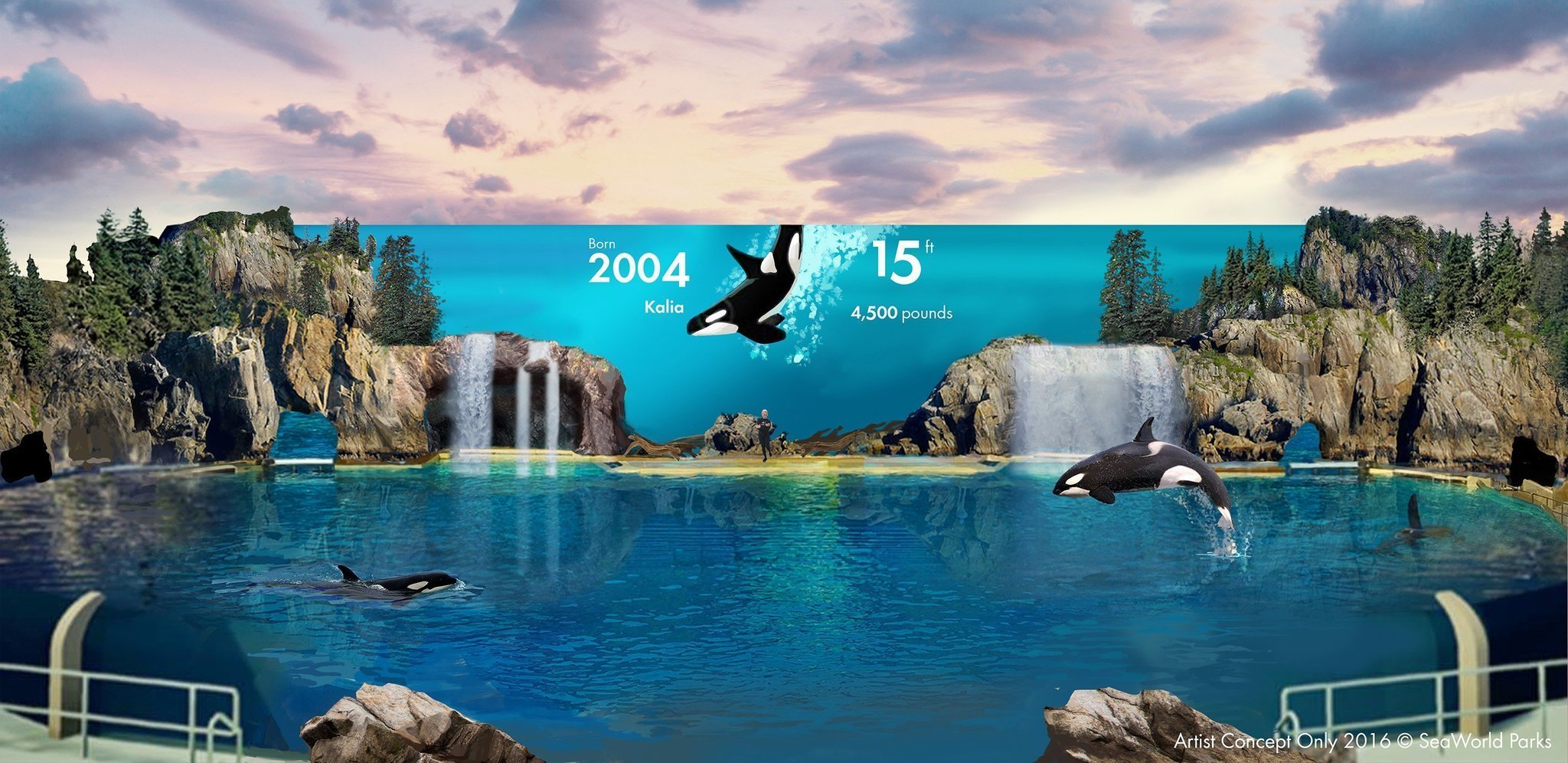 Seaworld seeks ok for new orca encounter stage the san for Pool show san antonio