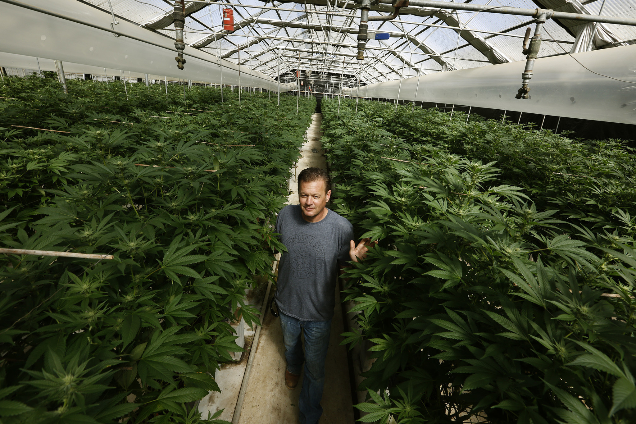 The greenhouse gold coast - Here S Why Pot Growers Are Paying Millions For Old Greenhouses In The Salinas Valley La Times
