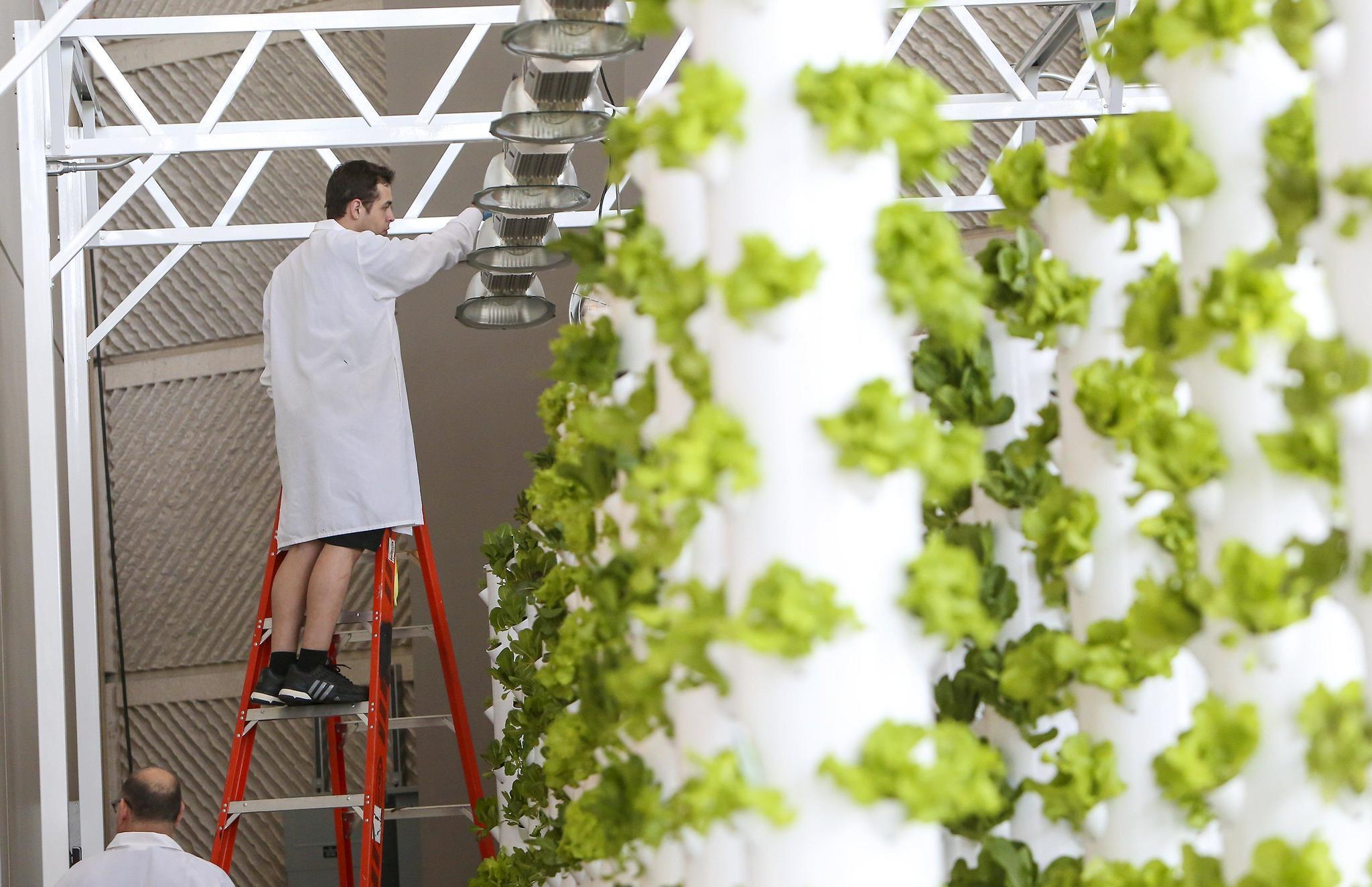 Orange County Convention Center Launches Urban Garden   Orlando Sentinel