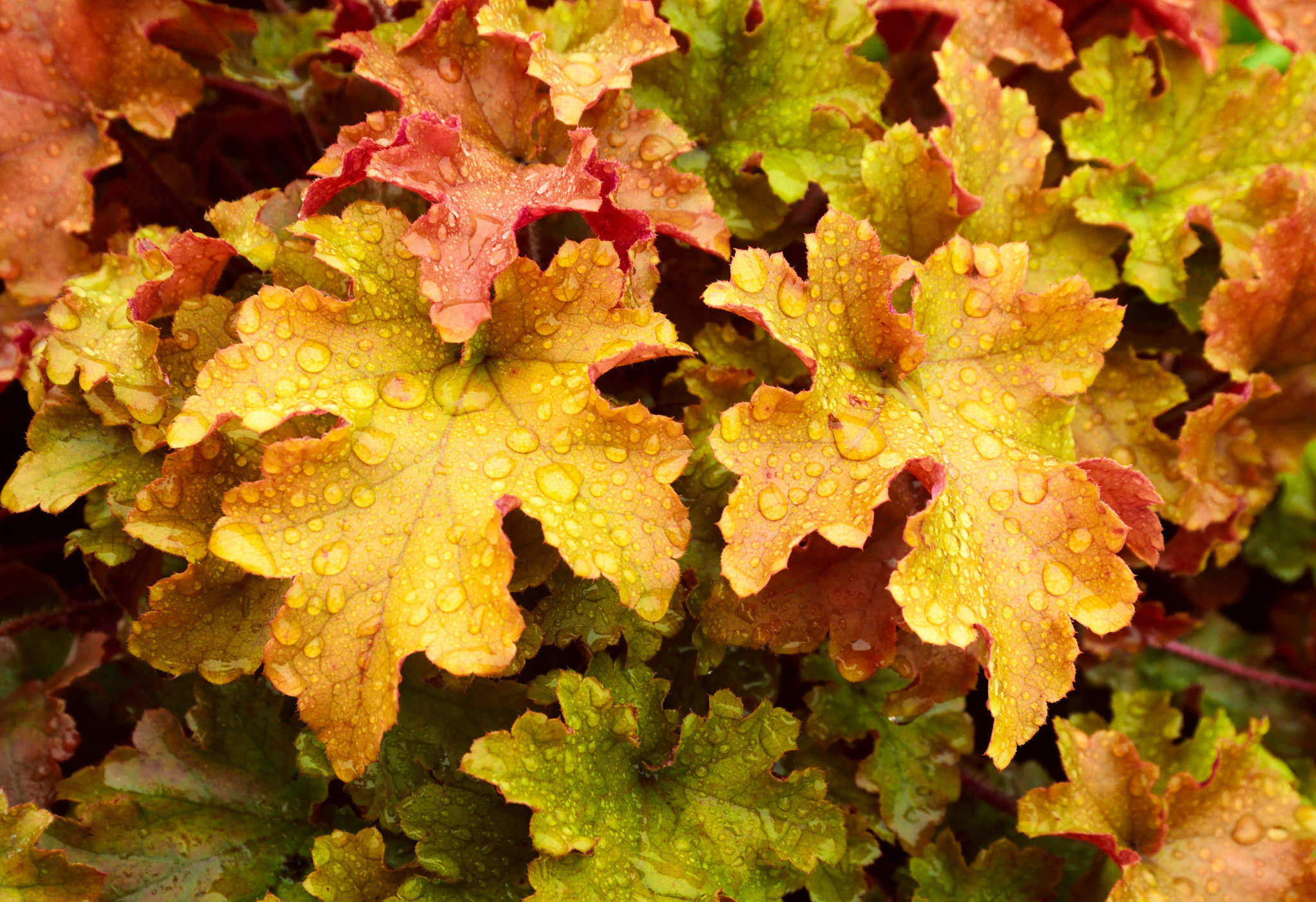 The Perfect Potted Plants For A Gorgeous Fall Display
