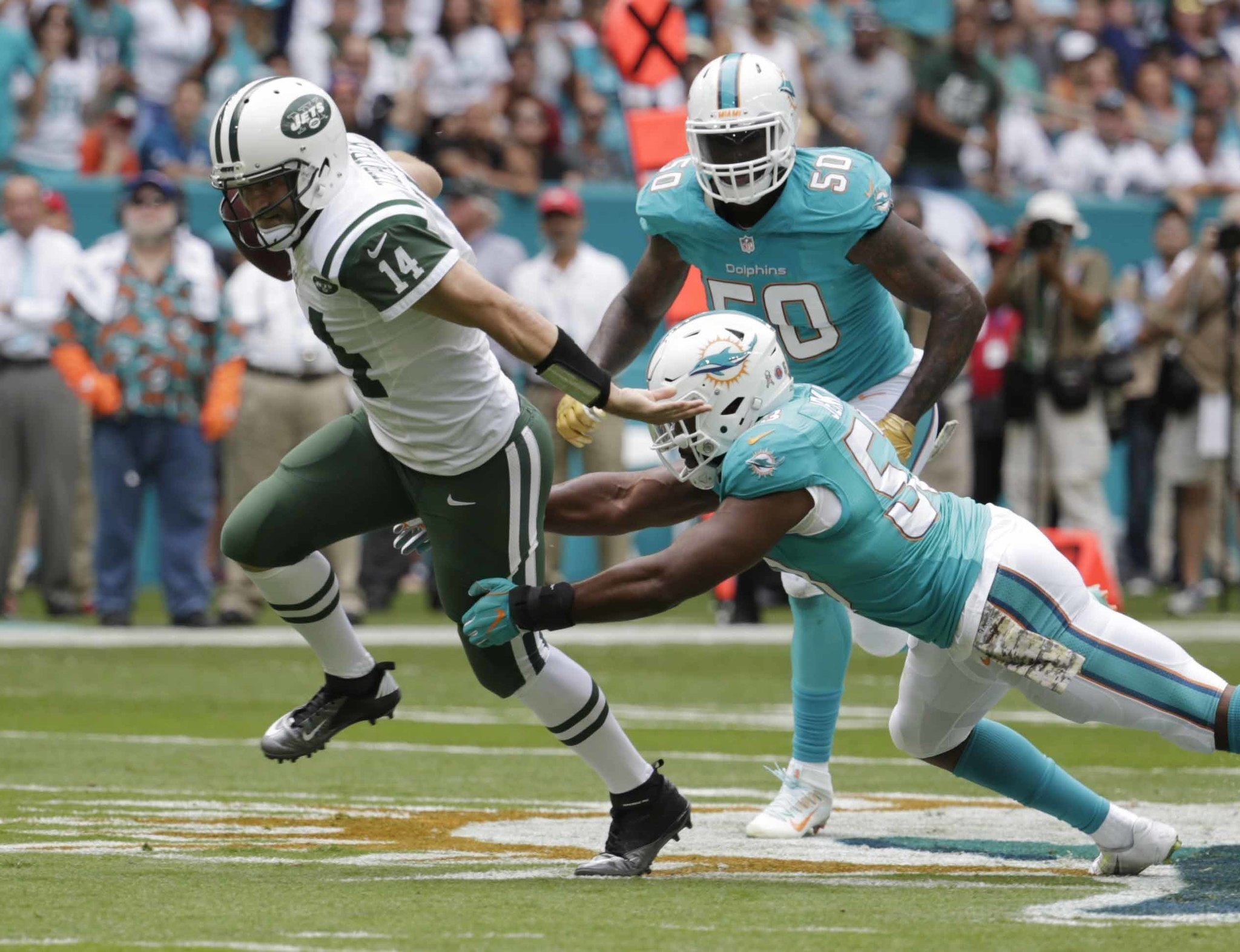 Fl-dolphins-1112-20161111