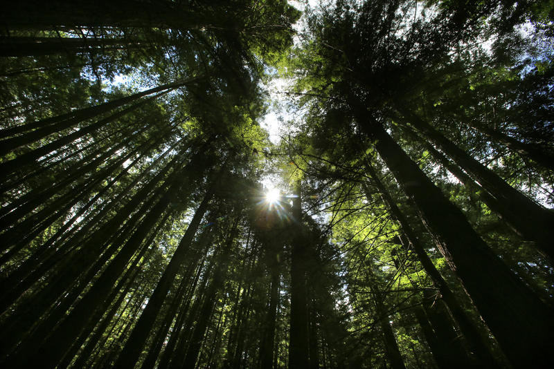 Humboldt Redwoods State Park (Mark Boster / Los Angeles Times)