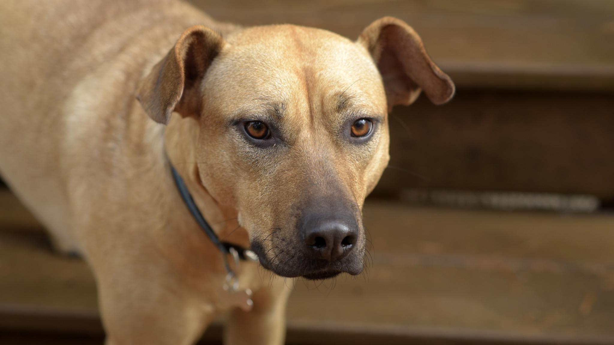 Collared - Baltimore Sun readers' pets - Baltimore Sun