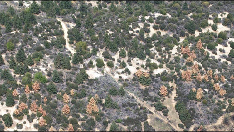 An aerial survey of tree mortality in California