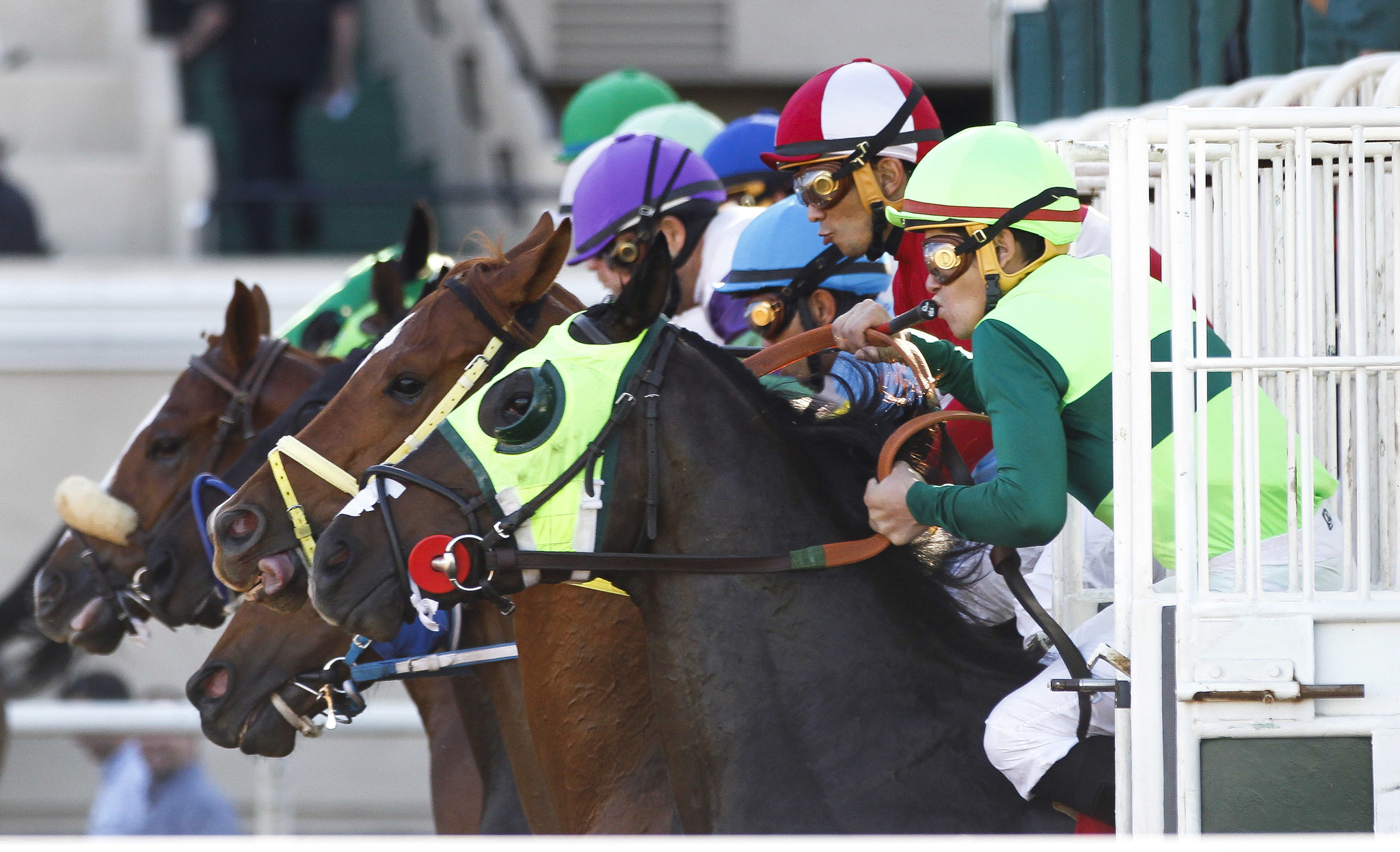 Horses And Jockeys Bolt Out Of The Gate At Start A Recent Race