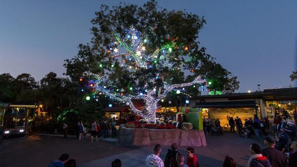 san diego zoo offers christmas on the wild side the san diego union tribune - Best Christmas Lights In San Diego