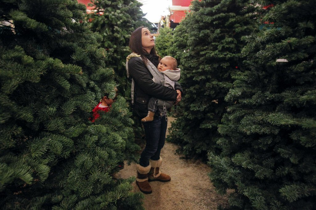 Oregon Christmas Tree Growers