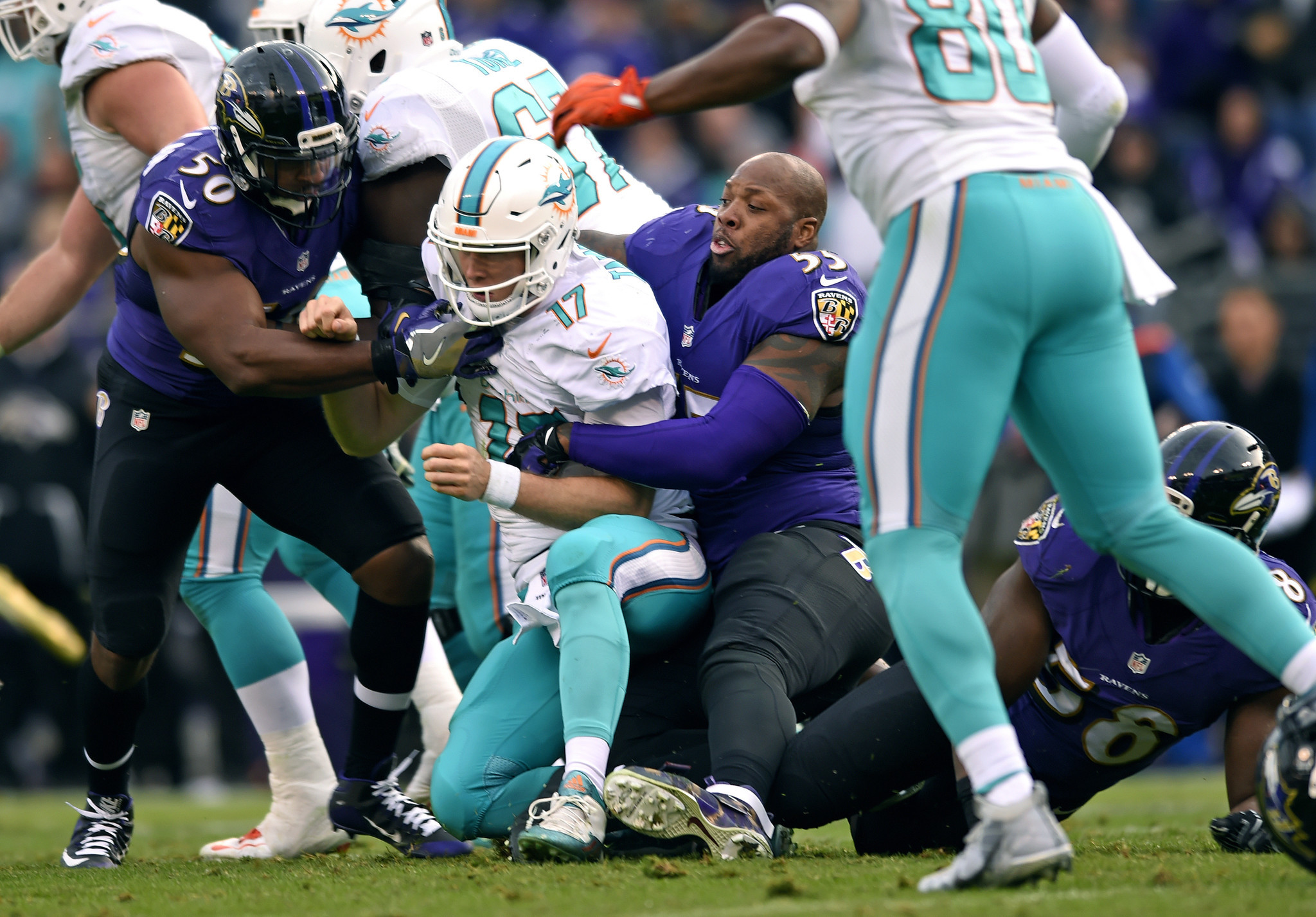 Fl-dolphins-notes-1205-20161204