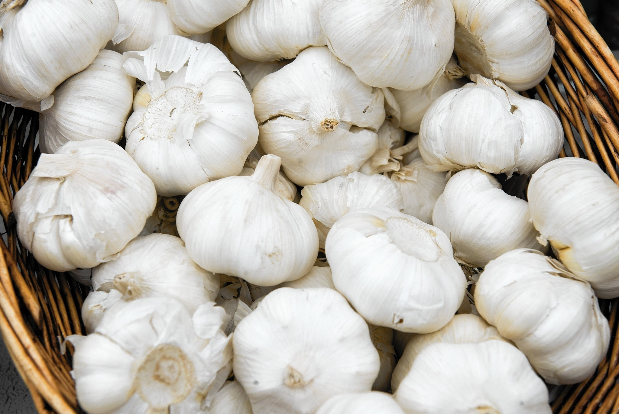 A Beginner 39 S Guide To Growing Garlic Chicago Tribune