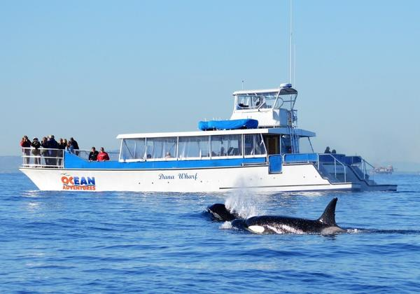 Kids go free on Dana Point whale-watching tours in December