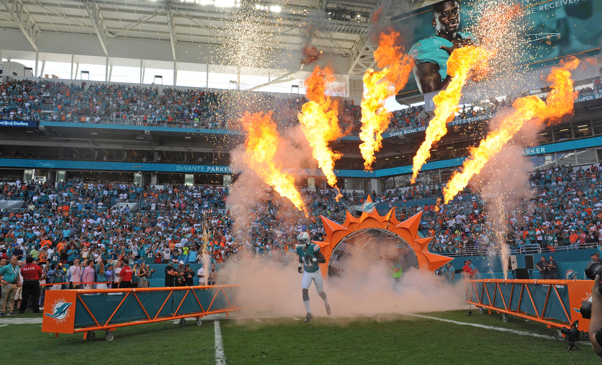 Fl-dolphins-preview-box-1211-20161210