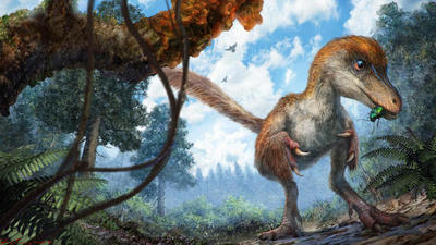 Feathered baby dinosaur tail found trapped in amber