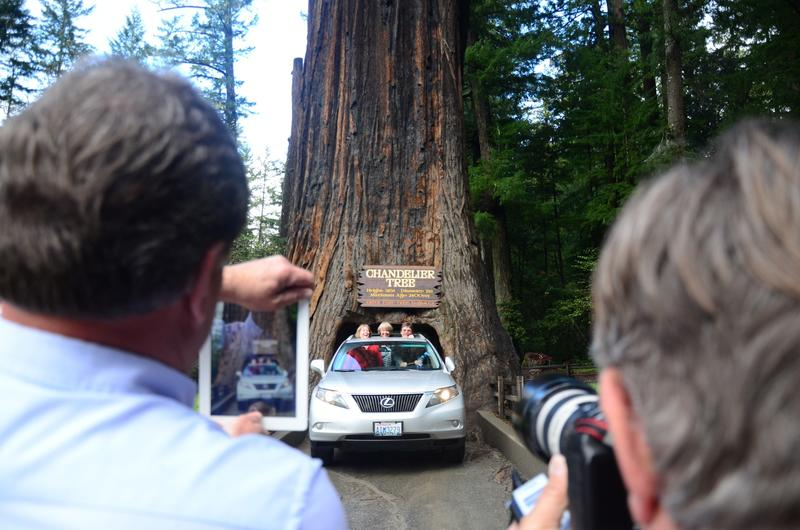 Mendocino County\'s Chandelier tree is the most handsome drive ...