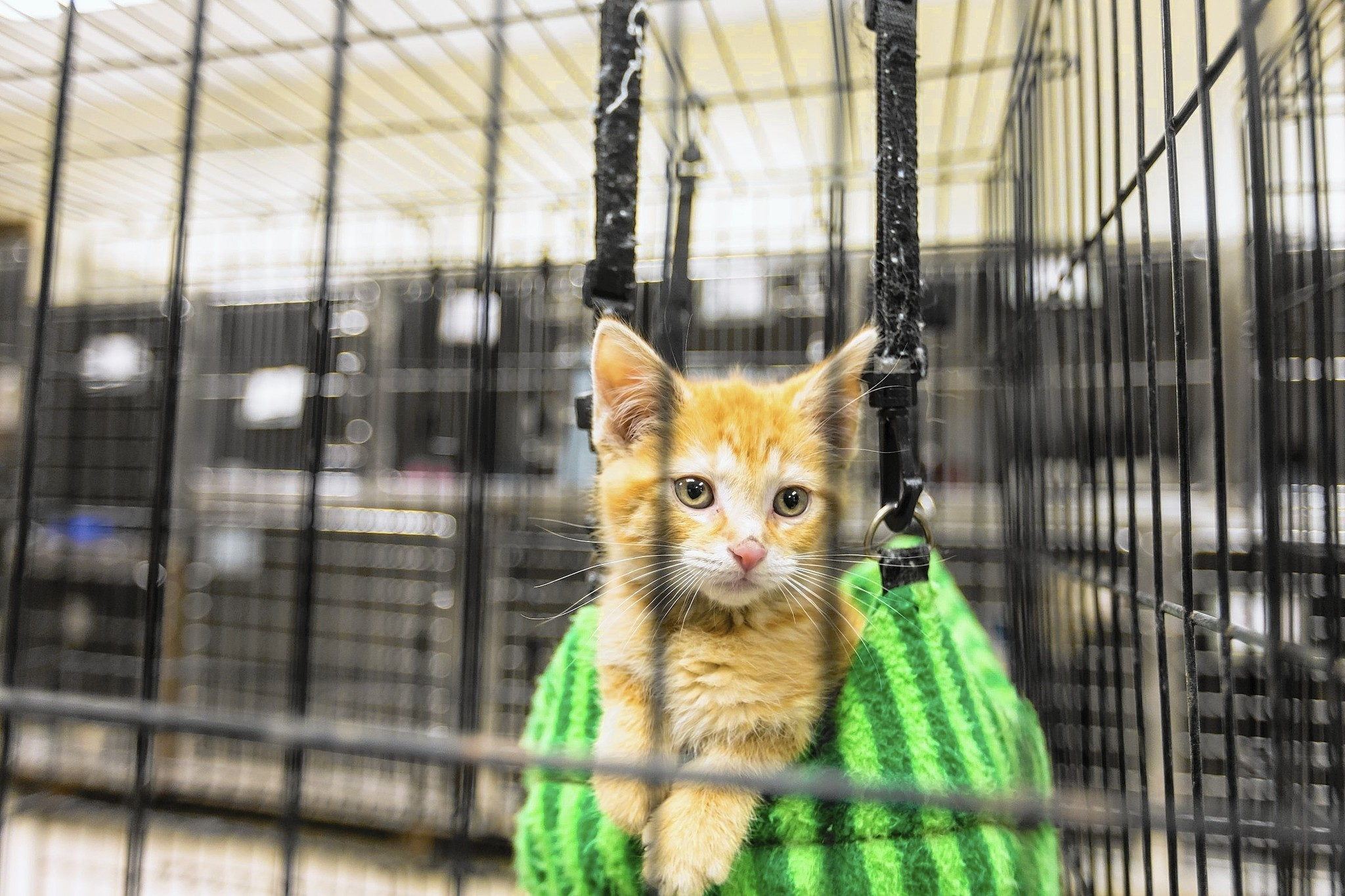 Holiday pet adoptions present challenges for shelters families
