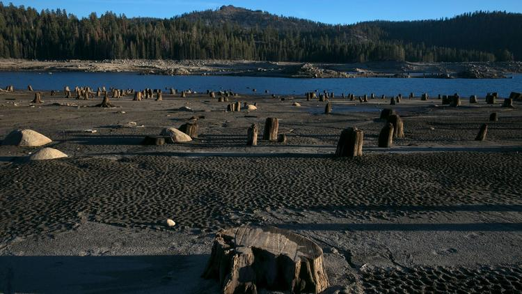 Southern California Edison has drawn down the level of water exposing cut trees stumps usually underwater at Huntington Lake.