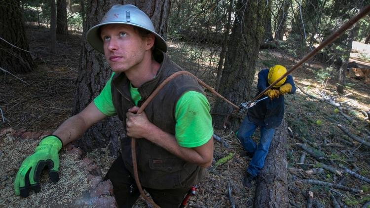 Garrett McGee, left, and TJ Best, use a rope to keep tension on a tree while cutting them down with Niles Kant's crew at Camp La Salle in Huntington Lake.