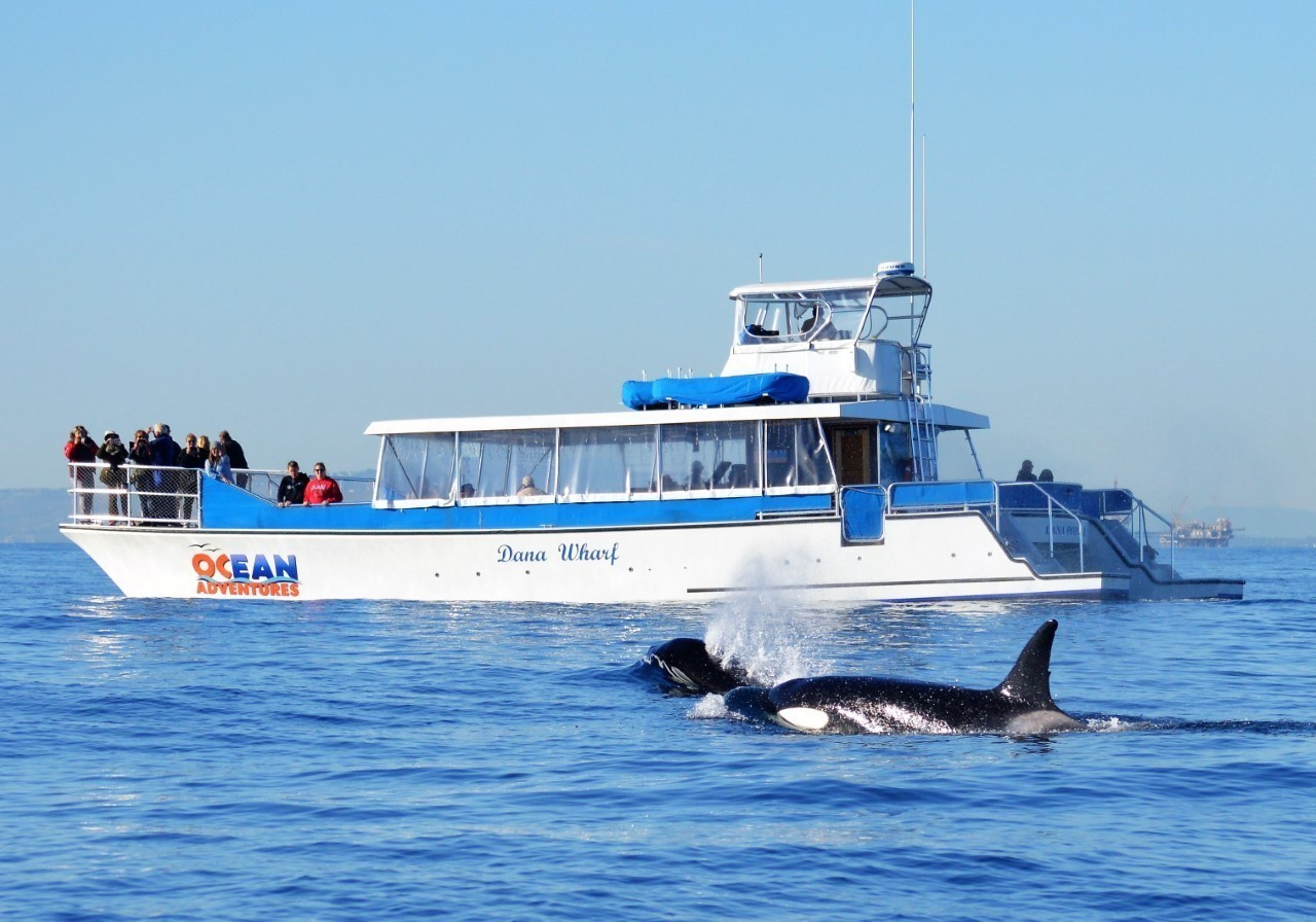 Kids go free on dana point whale watching tours in for Dana wharf fishing