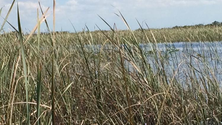 Everglades' water at risk from sea-level rise, scientists say