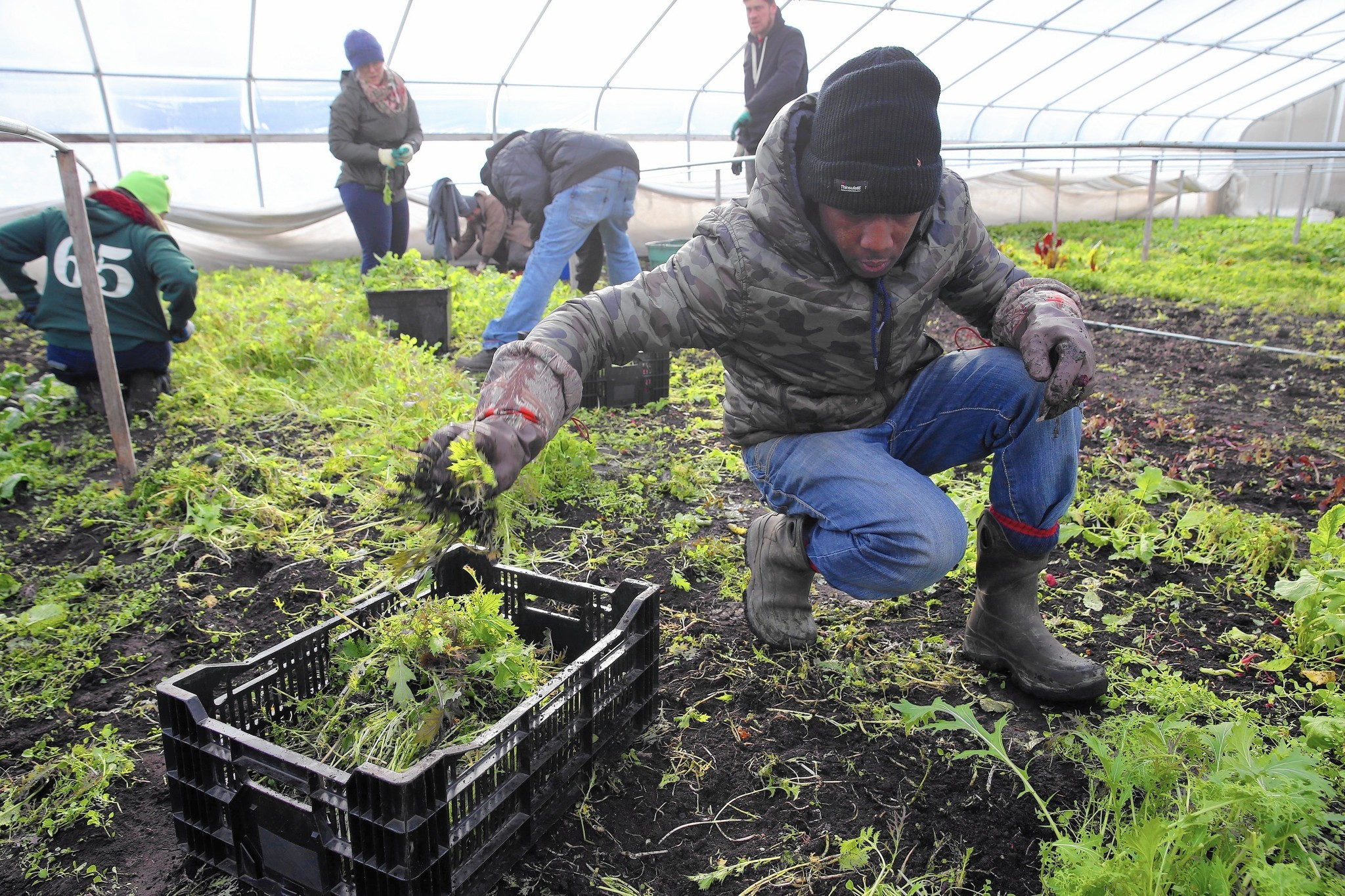 Five Urban Farming Projects In Chicago To Watch In 2017   Chicago Tribune