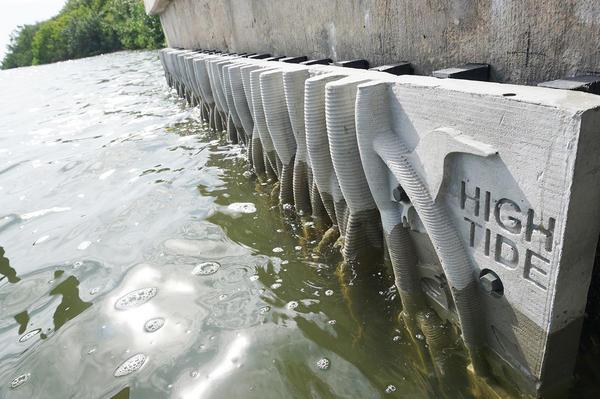 Panels Of Fake Mangroves May Transform Florida S Seawalls