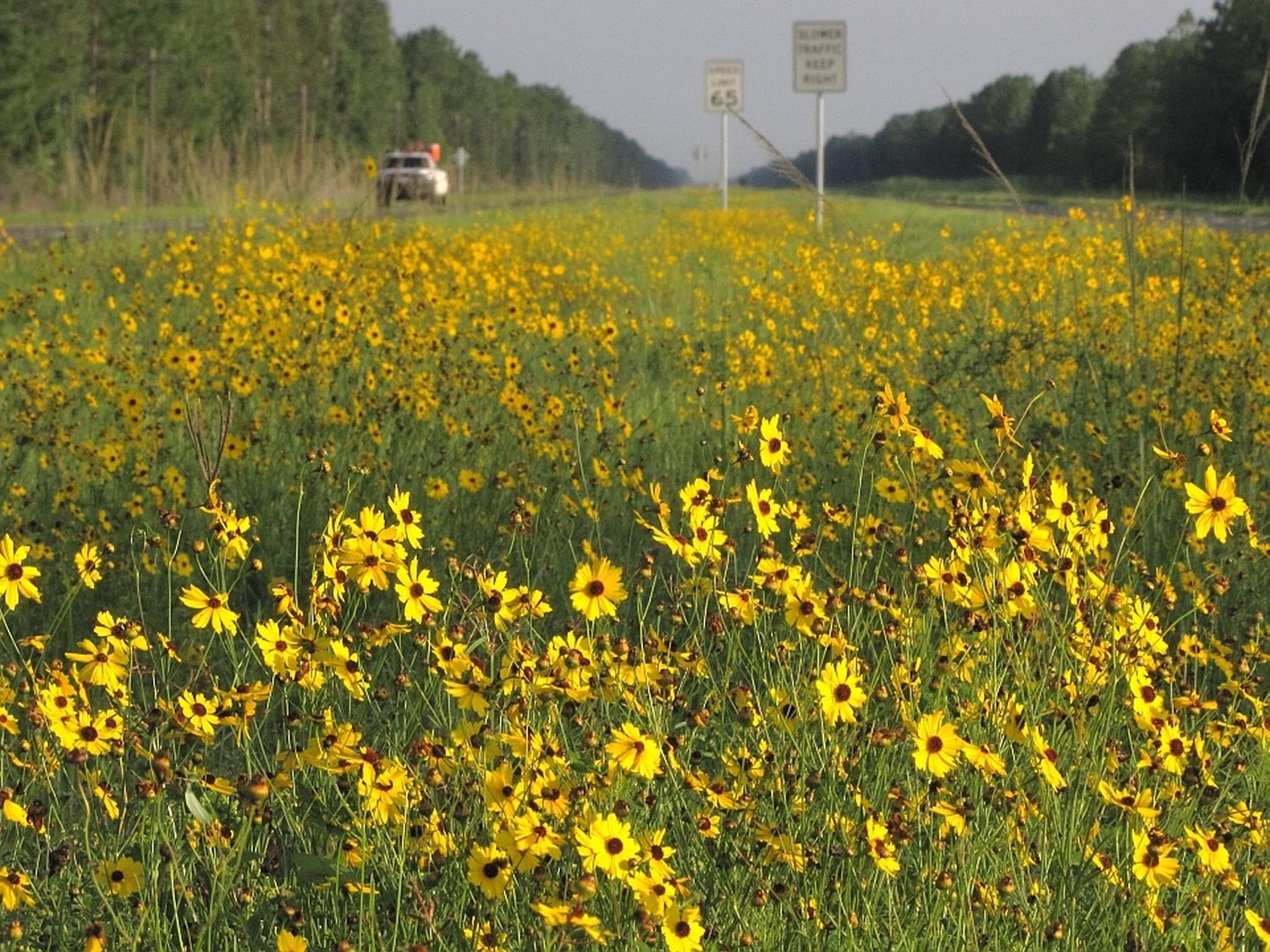 Florida Wildflowers Beauty Bees And Biodiversity Orlando Sentinel