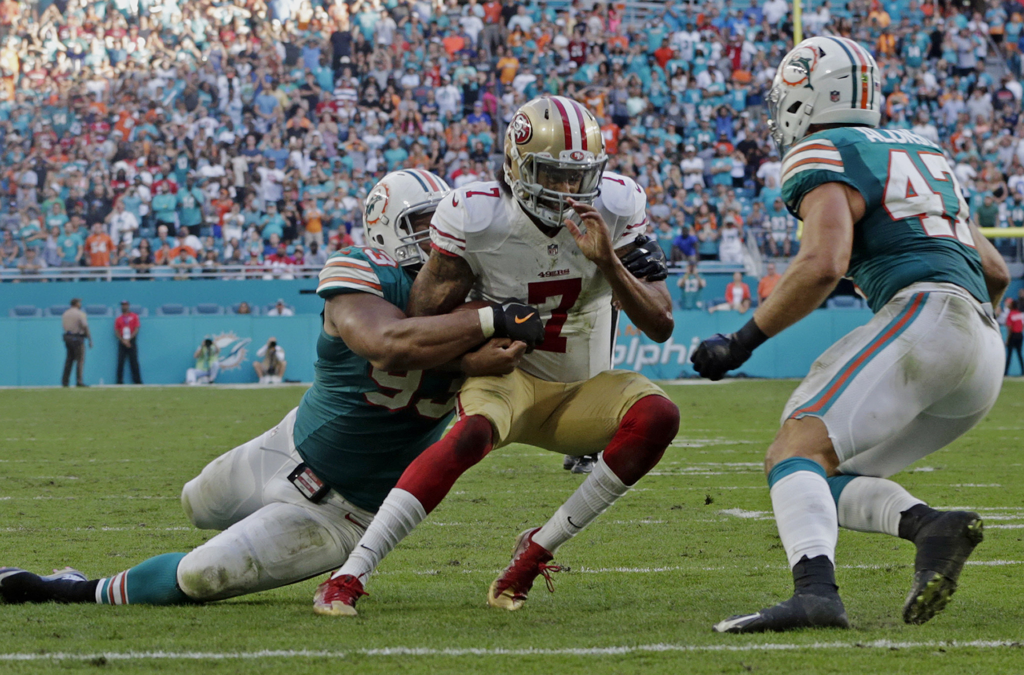 Fl-dolphins-preview-box-1224-20161223