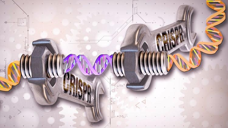 The U.S. Patent and Trademark Office is set to resolve a dispute over rights to the CRISPR-Cas9 gene-editing system.
