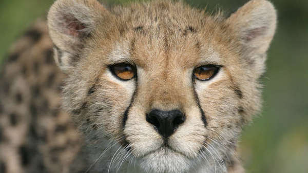 endangered species should be prioritized We will write a custom essay sample on endangered species essay specifically for you for only $1638 $139/page  endangered species should be prioritized .