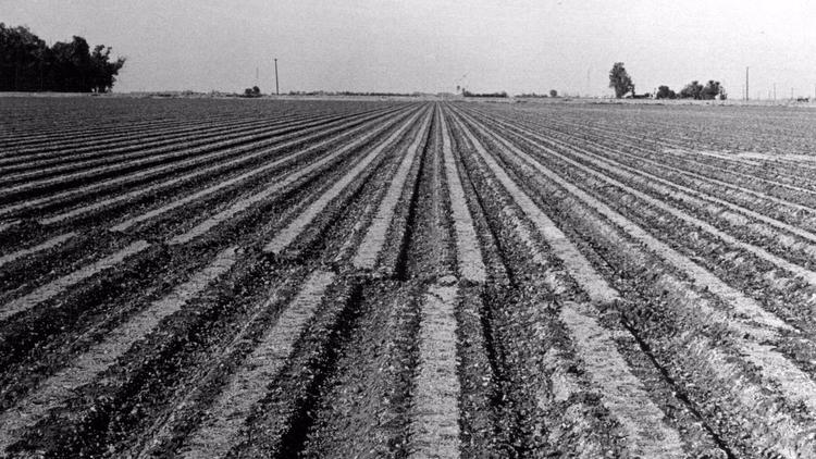 Furrows in a plowed field were offset by 11 inches in this magnitude-6.5 earthquake in California's Imperial Valley in 1979.