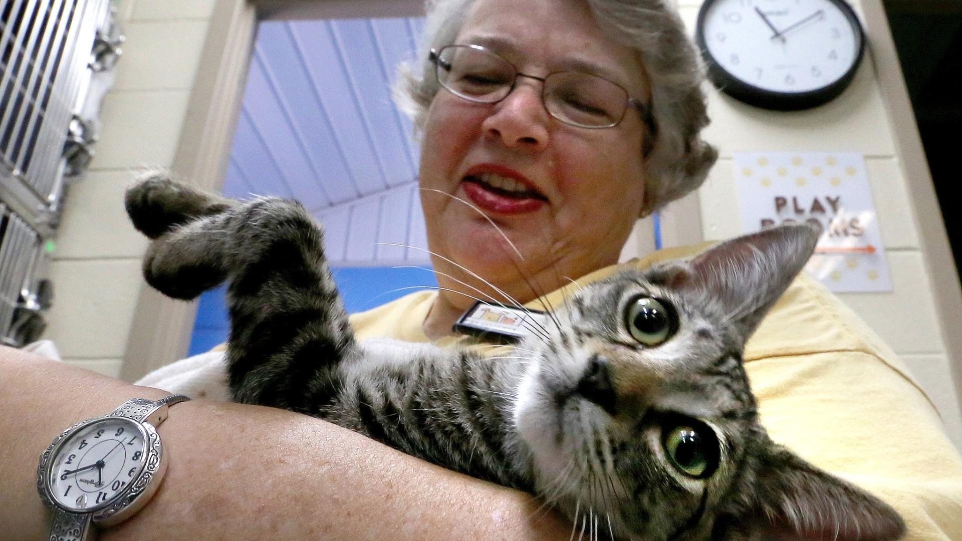 cat adoption fort wayne