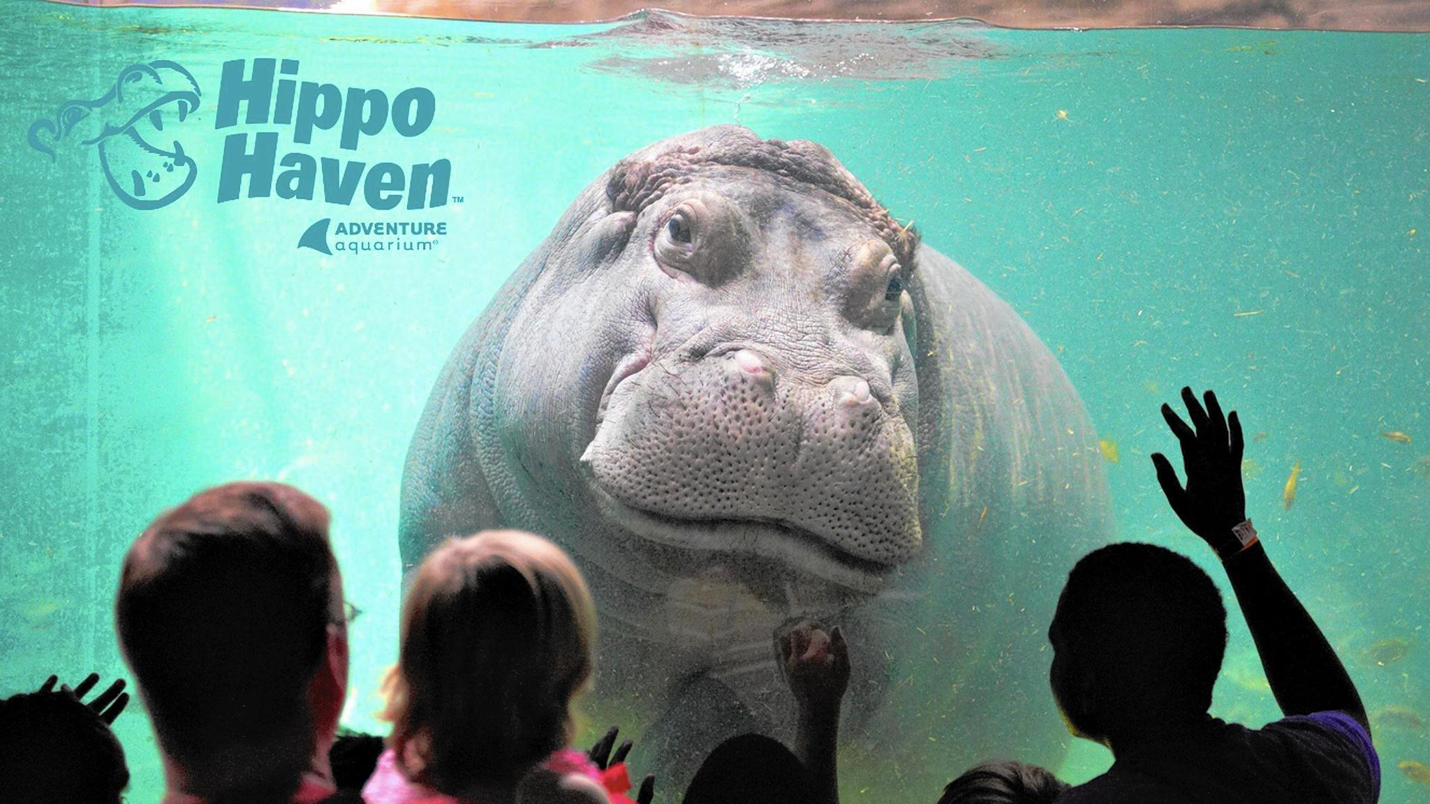 The Biggest Highlights At Regional Aquariums The Morning
