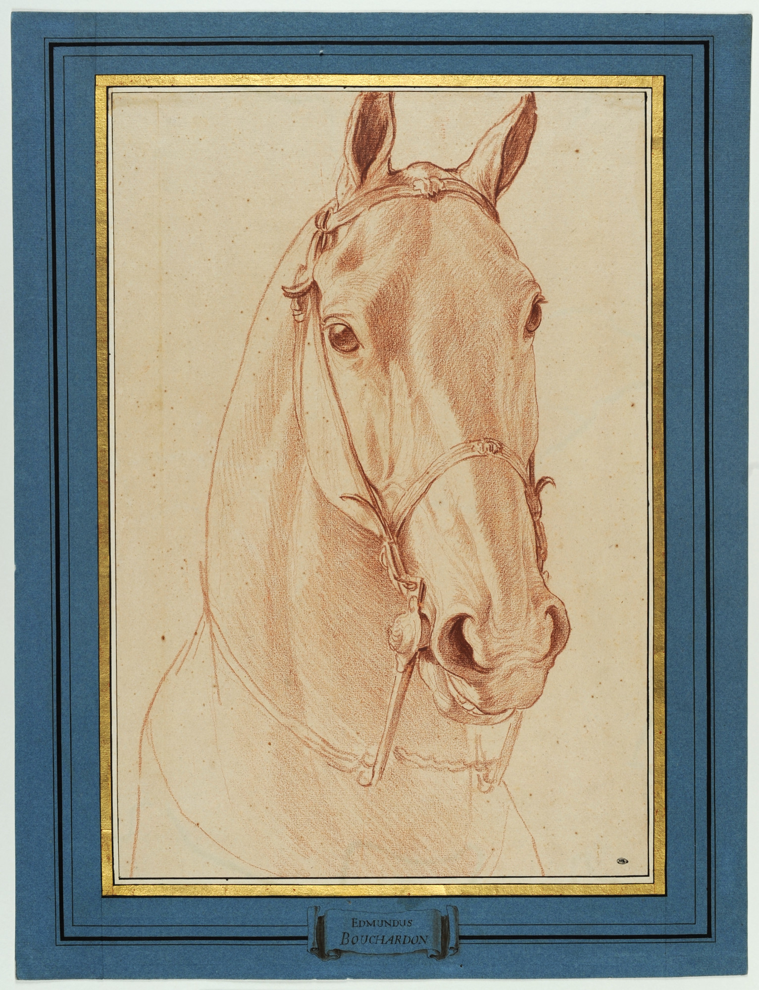 "Edme Bouchardon, ""Head of a Horse,"" 1749-52, red chalk."