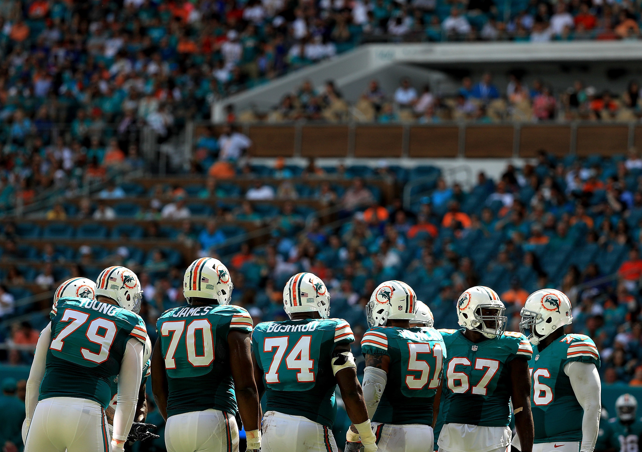 Fl-dolphins-0113-20170112