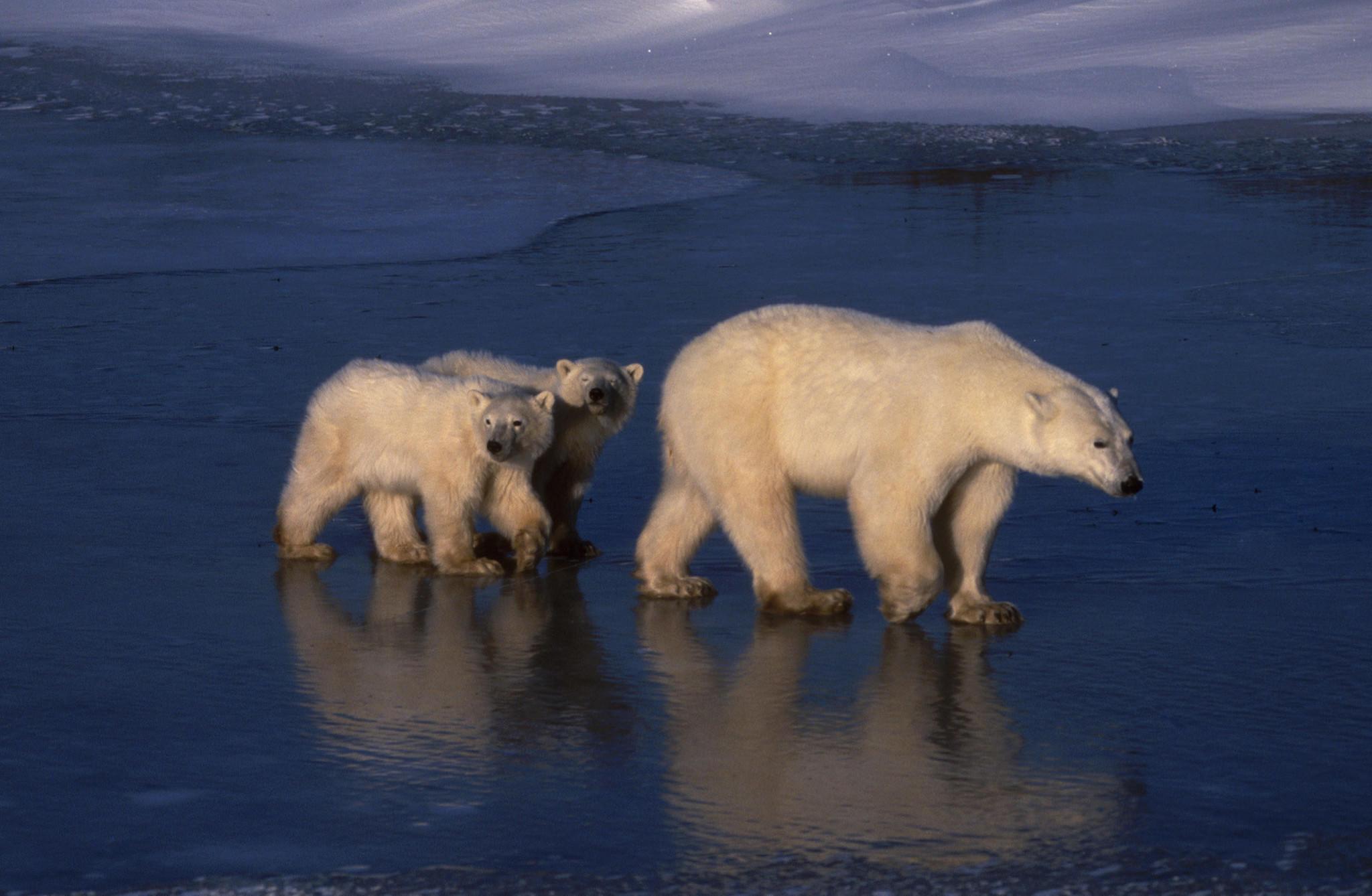 'planet Earth Ii,' Bbc America  La Times