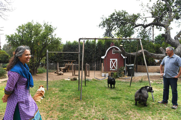 This family is creating a zero-waste homestead in Altadena with goats, chickens and bees
