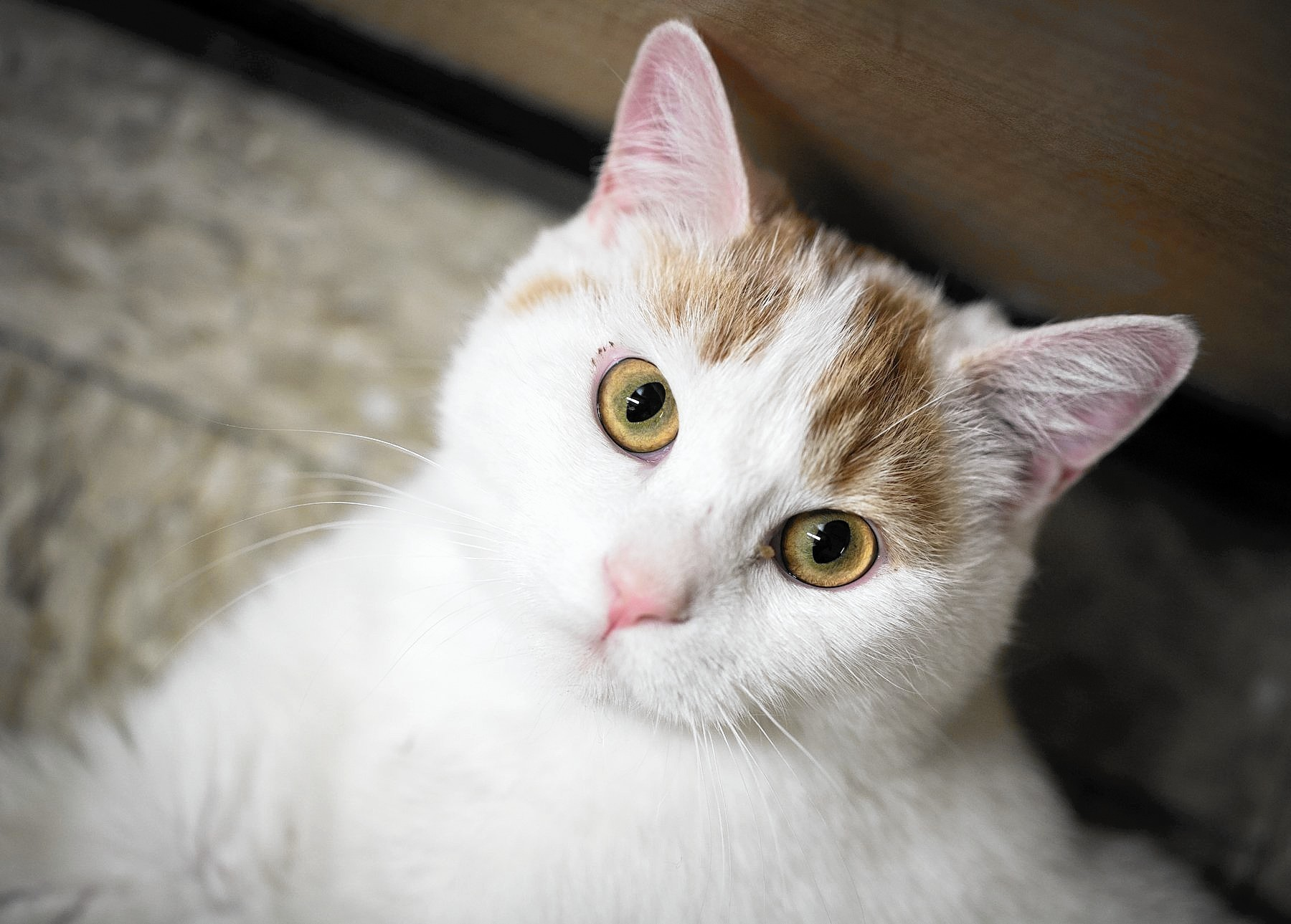 Cat Rescue Of Maryland