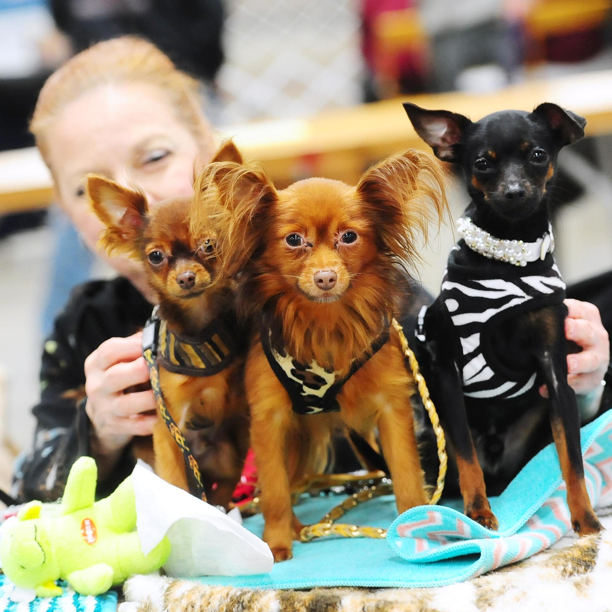 Lehigh Valley Kennel Club Dog Show
