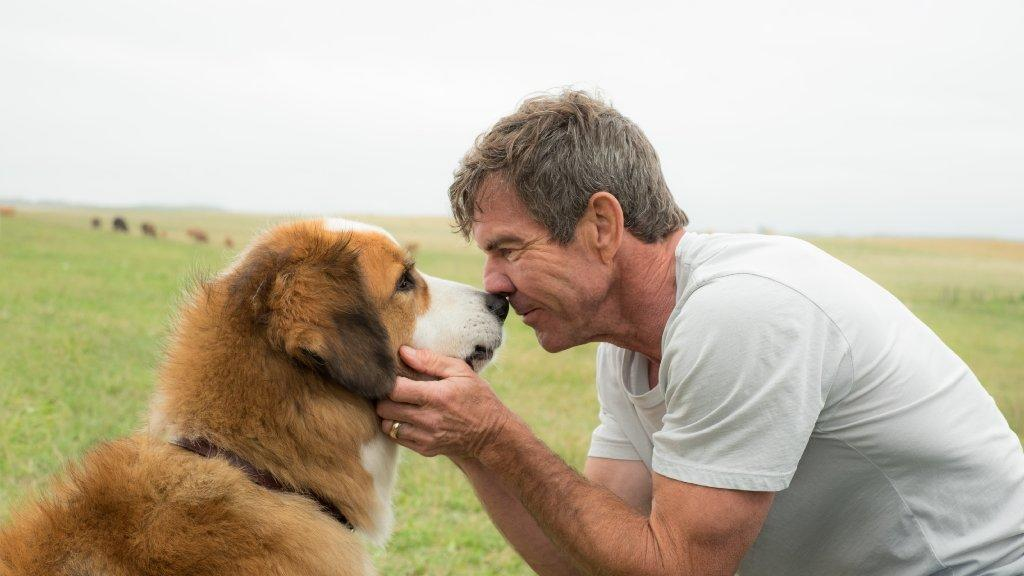"Josh Gad voices the dog and Dennis Quaid stars as Ethan in the film ""A Dog's Purpose."" (Joe Lederer / Universal Pictures)"