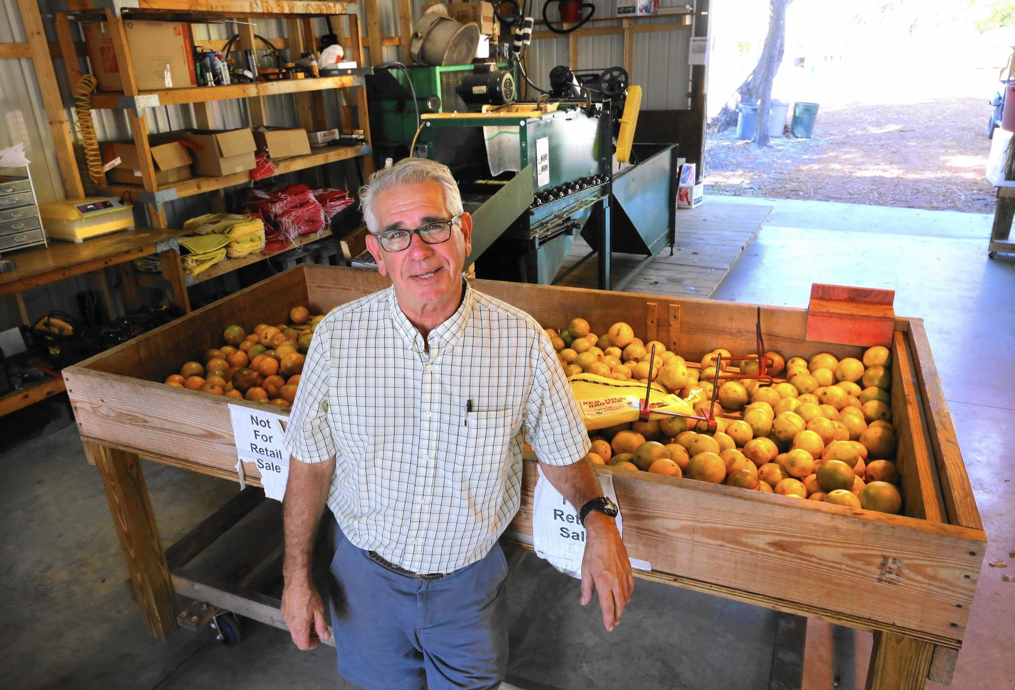 Central Florida citrus growers find creative ways to ...