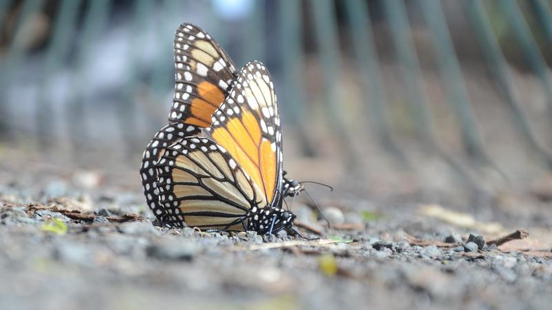Monarch Butterfly Grove, Pismo Beach. (Christopher Reynolds/Los Angeles Times)