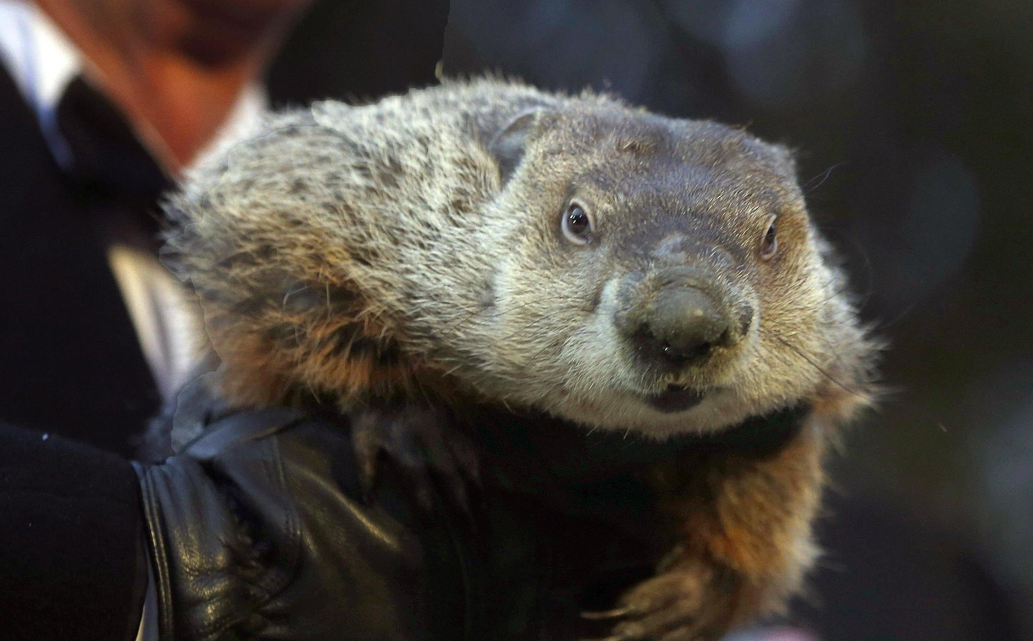 5 fun facts about groundhog day the morning call