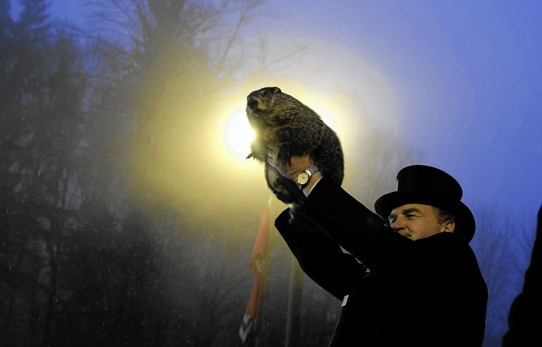 biologist sees groundhog day as a celebration of science not biologist sees groundhog day as a celebration of science not superstition baltimore sun