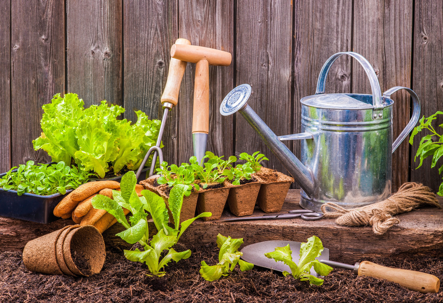 Garden tips did you know pomerado news for Home and garden equipment