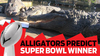 Falcons or Patriots? Gatorland alligators predict Super Bowl winner