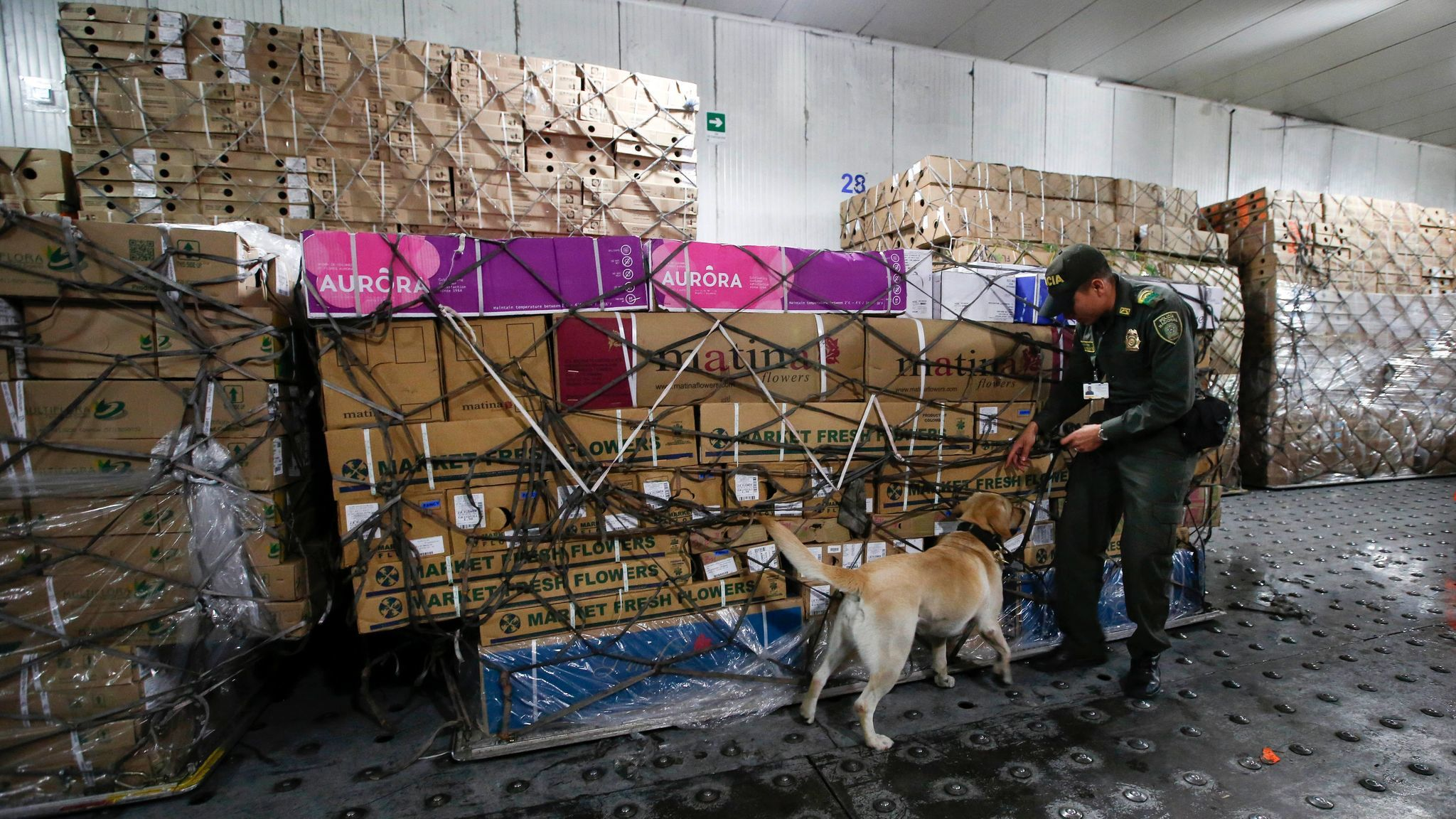 colombia keeps cocaine from spoiling valentine u0027s day flowers la