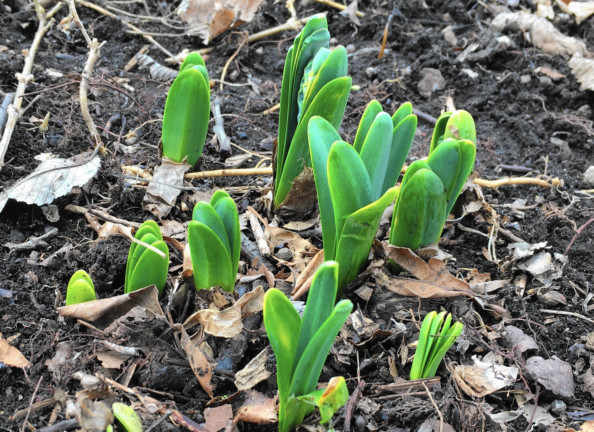 Gardeners, don't stress about Chicago's warm spell