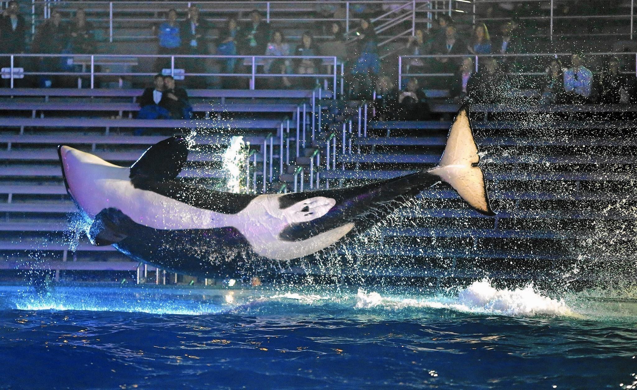 Seaworld reports lackluster revenues and a drop in attendance la times