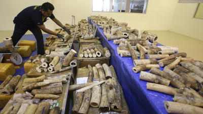 Thailand seizes 422 pieces of smuggled elephant tusks